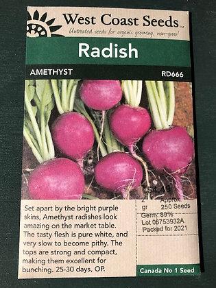Radish Amethyst  -  West Coast Seed