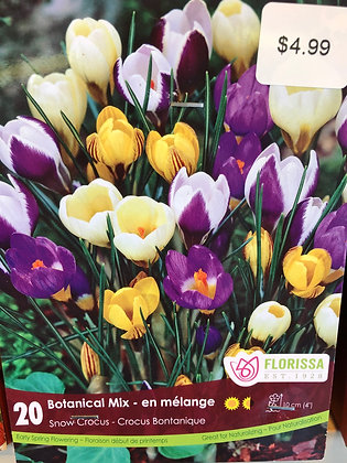 Crocus - Botanical Mix