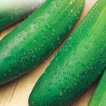 Cucumber Earliest Mincu - McKenzie Seed