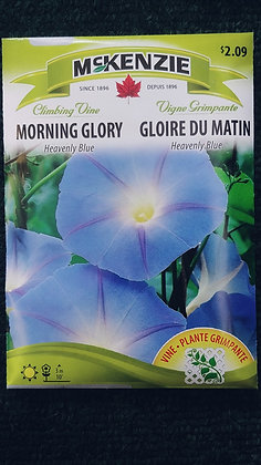 Morning Glory Heavenly Blue-McKenzie