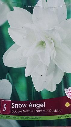 Daffodil - Snow Angel