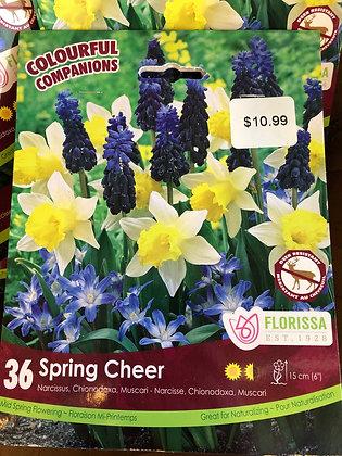 Spring Cheer Mixed Bulbs
