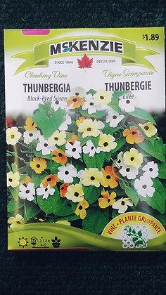 Thunbergia-McKenzie