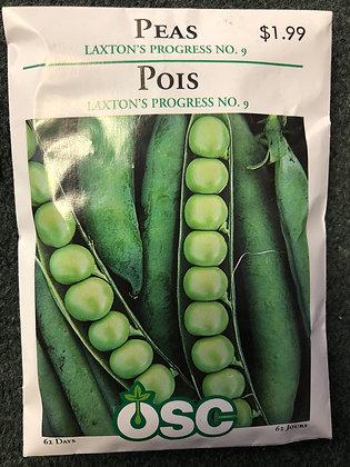 Seed- OSC -Peas Laxton's Progress No 9