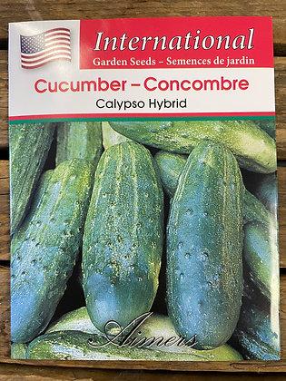 Cucumber Calypso Hybrid - Aimers International