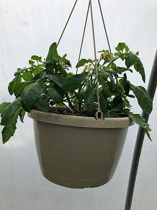 Tumbler Tomato Hanging Basket (VHB-)