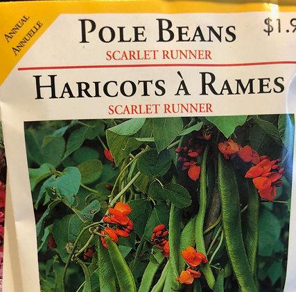 Seed - OSC - Bean Scarlet Runner