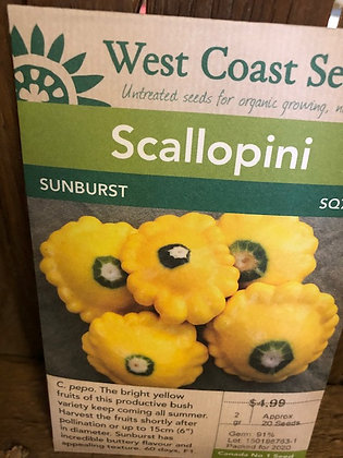 Squash Scallopini Sunburst - West Coast Seed