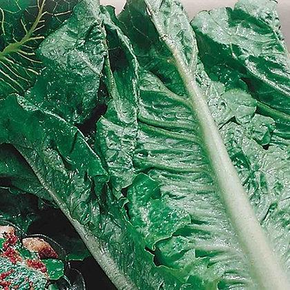 Lettuce Romaine - McKenzie Seedtape