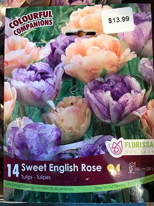 Mixed Tulips - Sweet English Rose