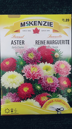 Aster Early Charm-Mckenzie