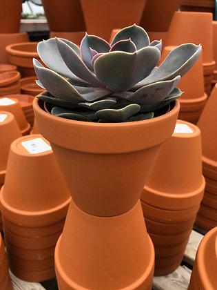 """Clay Pot 10"""""""