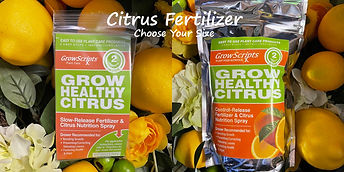 Buy citrus food at the Carleton Place Nursery Online Store
