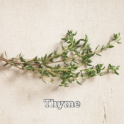"Herb Thyme  4"" Po"