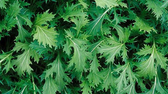 Lettuce Mizuna Green  -  Aimers Seed