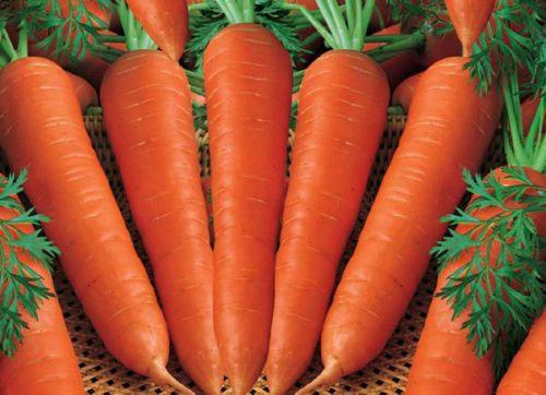 Carrot Nantes  -  Aimers Seed