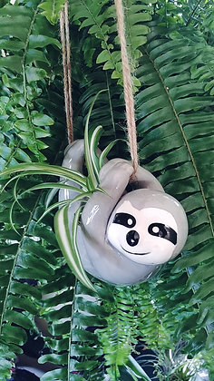 'Hang in there' Sloth - Plant not included.