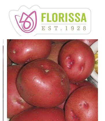 Seed Potatoes - Red Pontiac- 2 kg