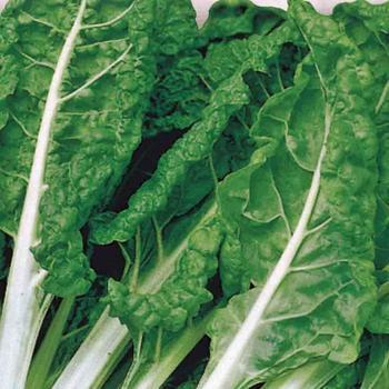Swiss Chard  - McKenzie Organic