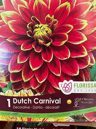 Bulb - Dahlia Dutch Carnival - 1 Bulb