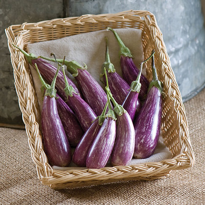 Eggplant   6 Pack - Select Variety