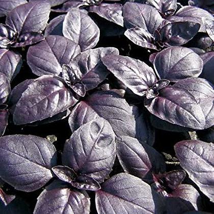 Basil Red Rubin  -  Aimers Seed