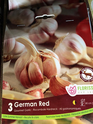 Garlic - German Red