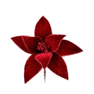 Velvet Red Poinsettia