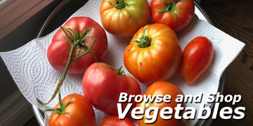 Vegetable plants at Carleton Place Nursery