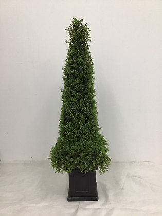 "Boxwood Obelisk 46"" w Pot"