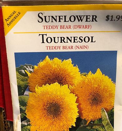 Seed - OSC - Sunflower Teddy Bear