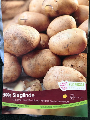 Seed Potatoes - Gourmet Sieglinde - 500 gm