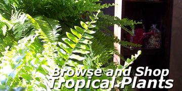 Browse and Shop Onsite or Online for Tropical Plants at Carleton Place Nursery