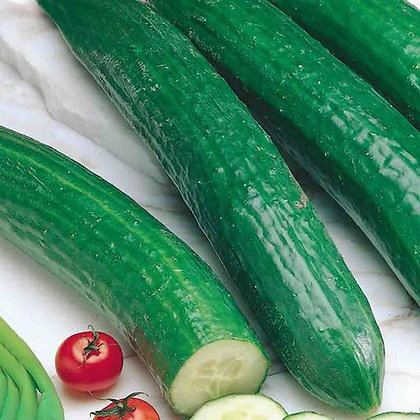 Cucumber Long English Telegraph - McKenzie Seed