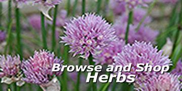 Herbs at Carleton Place Nursery
