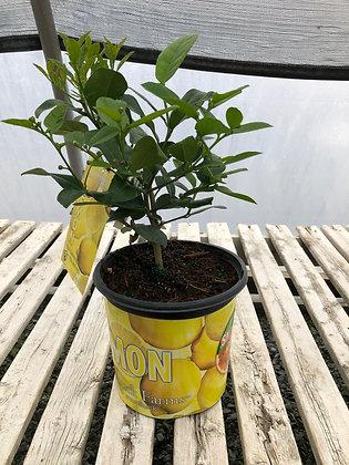 Citrus - Lemon - 1 Gallon