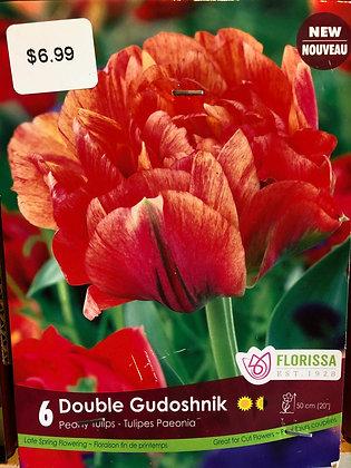 Tulip - Double Gudoshnik