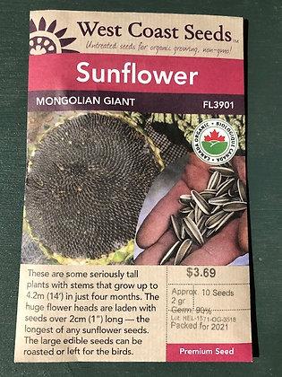 Sunflower Mongolian Giant - West Coast Seed