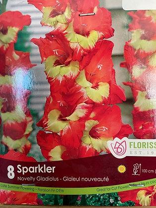 Bulb - Gladiolus Sparkler (Novelty) - 8 Bulbs