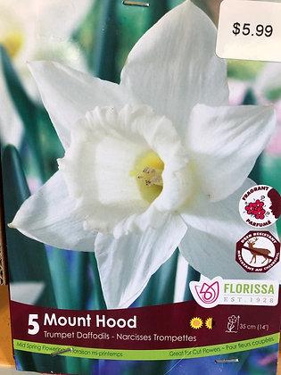 Daffodil - Mount Hood