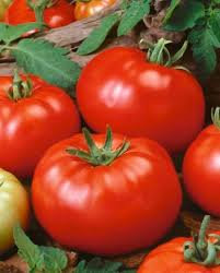 Tomato Beefsteak  -  Aimers Seed