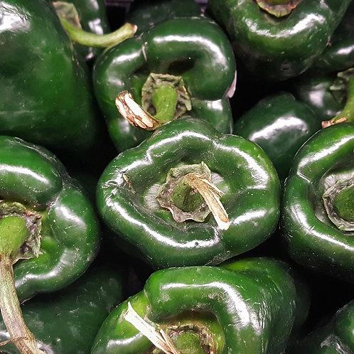 Poblano Pepper Plant