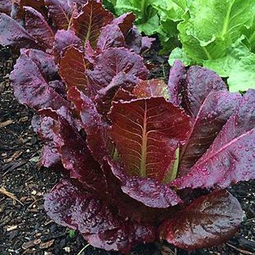 Lettuce Pack