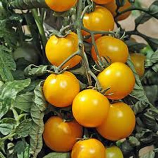 Gold Nugget Tomato