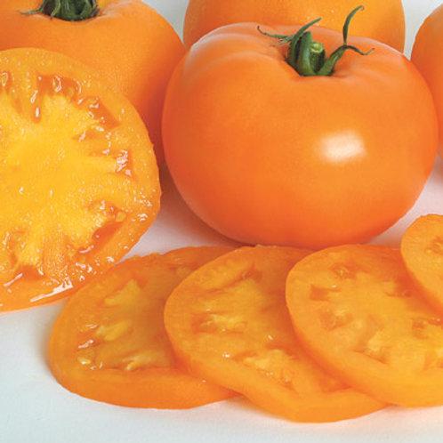 Orange Blossom Tomato