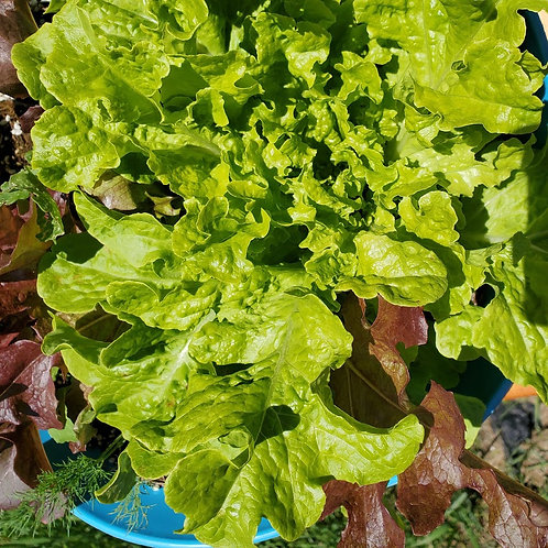 Salad Mix Bowl