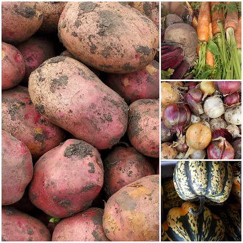 Large Root Veggie Box