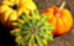 pumpkins-2204643_1280.webp