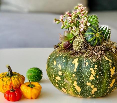 Halloween Pumpculent Workshop
