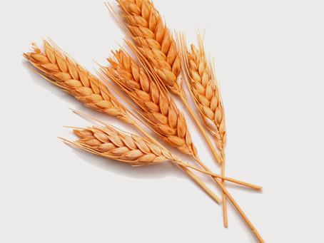 Hechizo del trigo para el éxito